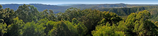 Conondale National Park Sunshine Coast