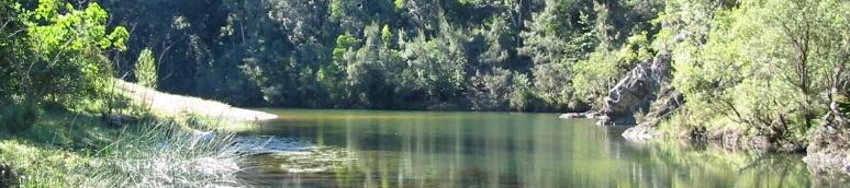 Imbil State Forest Sunshine Coast